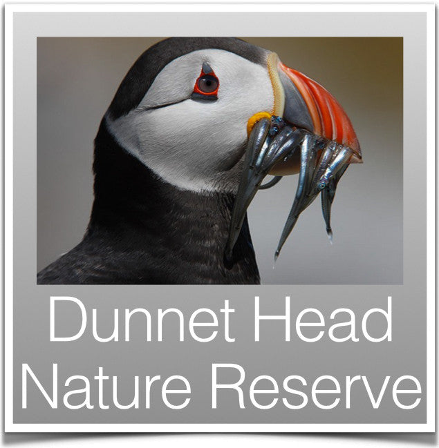 Dunnet Head Nature Reserve