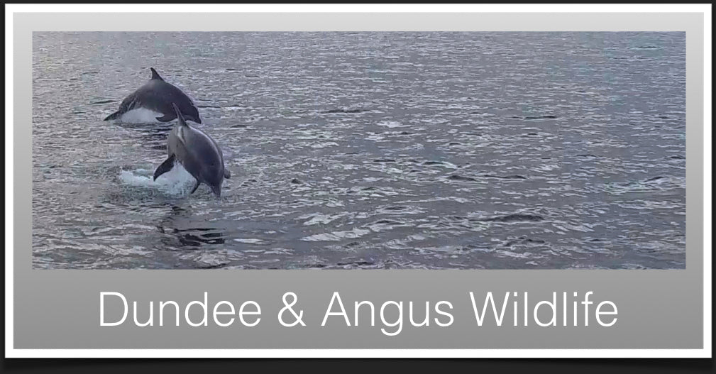 Wildlife in Dundee & Angus