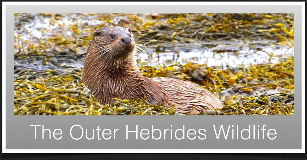 Wildlife in the Outer Hebrides