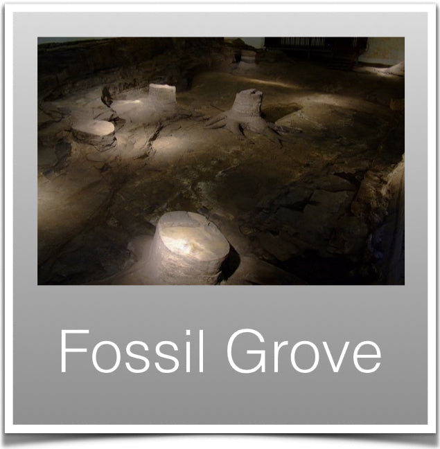 Fossil Grove