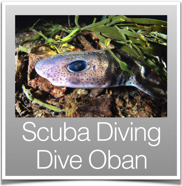 Scuba Diving Dive Oban