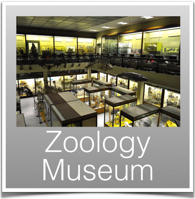 Zoology Museum