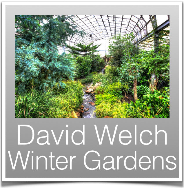 David Welch Winter Gardens