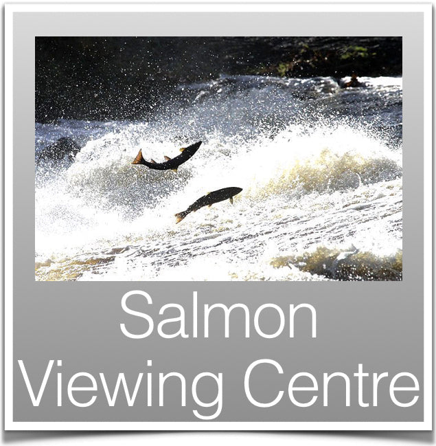 Salmon Viewing Centre