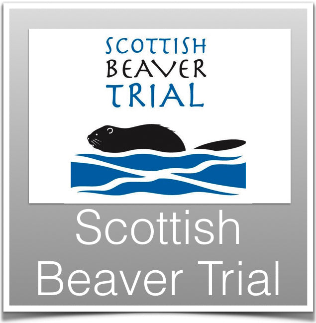 Scottish Beaver Trial