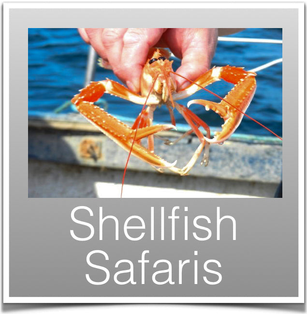 Shellfish Safaris
