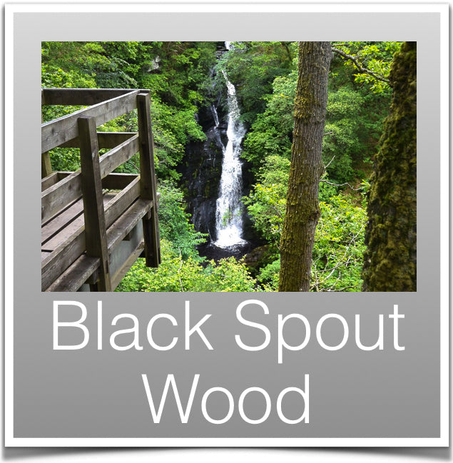 Black Spout Wood