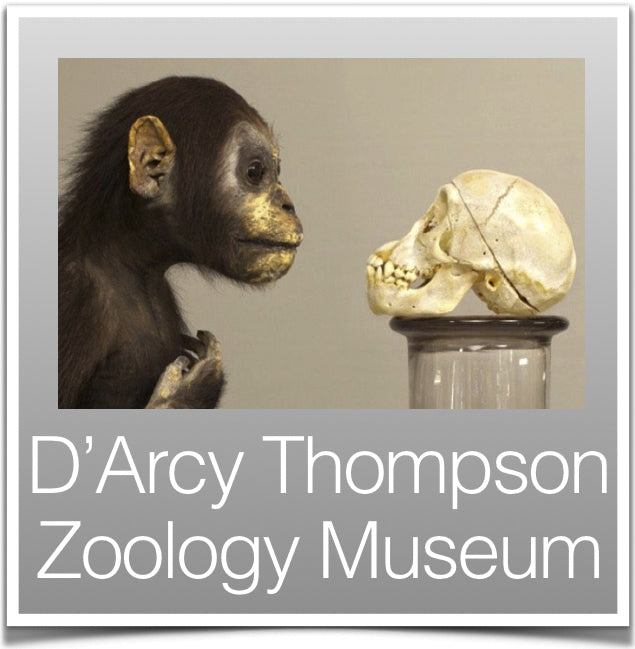 D'Arcy Thompson Zoology Museum