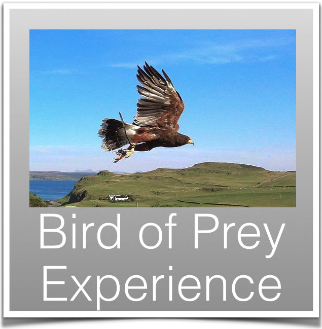 Bird of Prey Centre