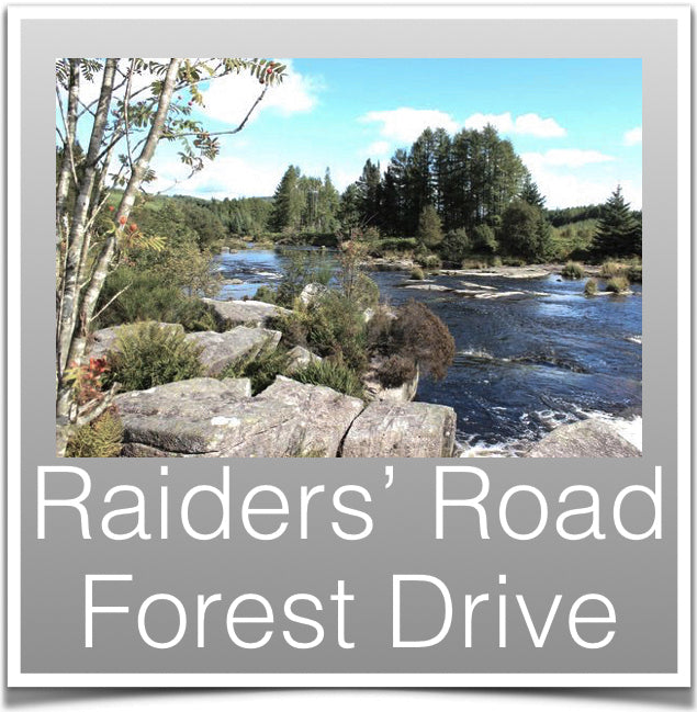Raiders Road Forest Drive