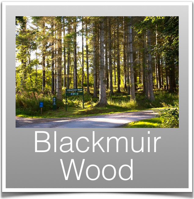 Blackmuir Wood