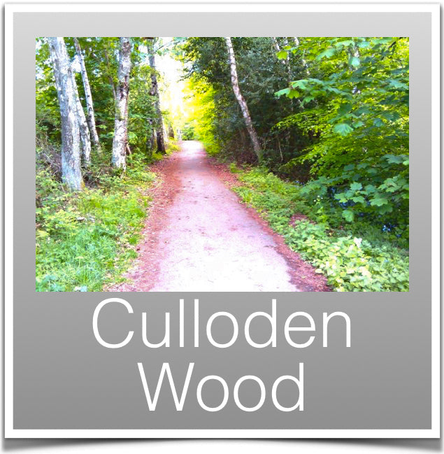 Culloden Wood