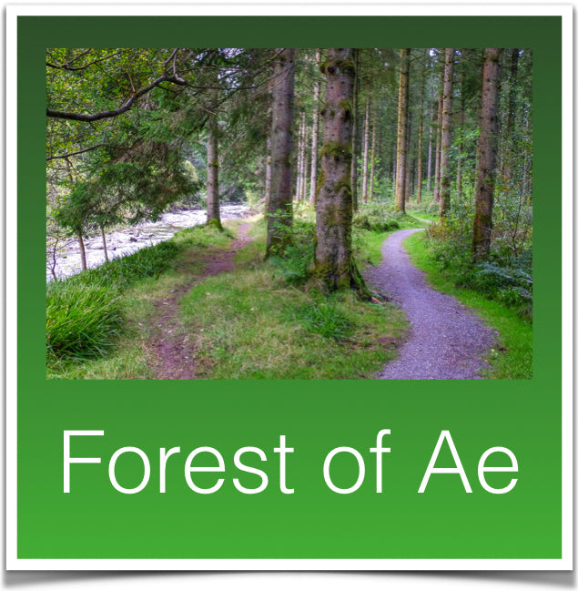 Forest of Ae