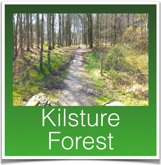 Kilsture Forest