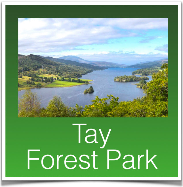 Tay Forest Park