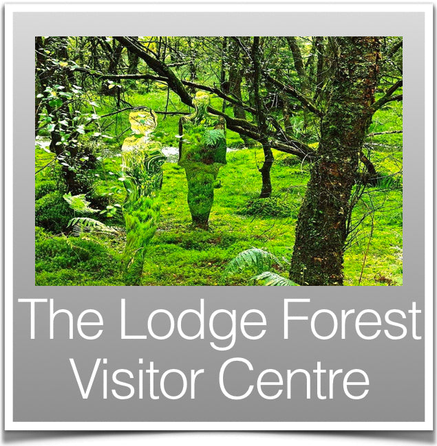 The Lodge Forest Visitor Centre