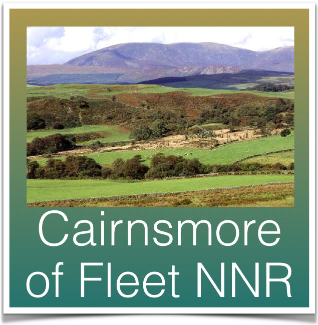 Cairnsmore of Fleet