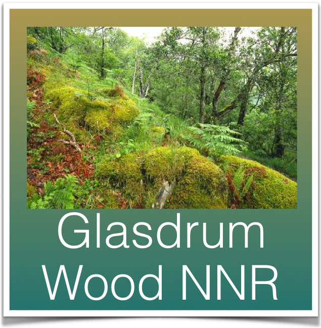 Glasdrum Wood