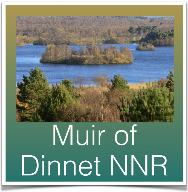 Muir of Dinnet