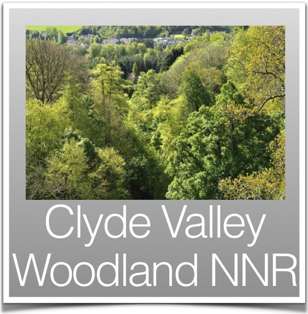Clyde Valley Woodland