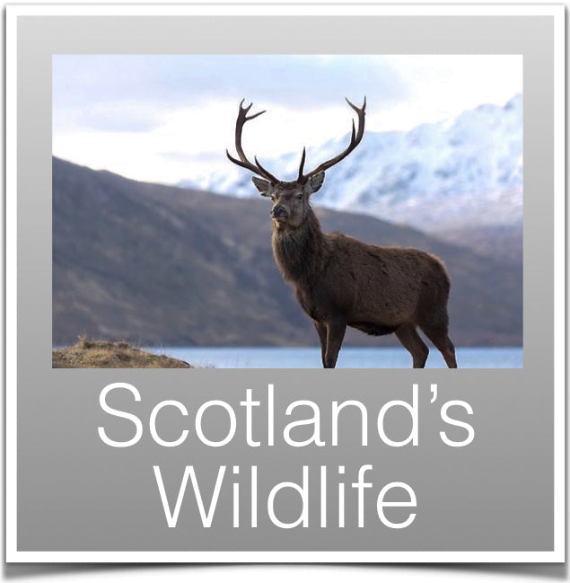 Wildlife Scotland