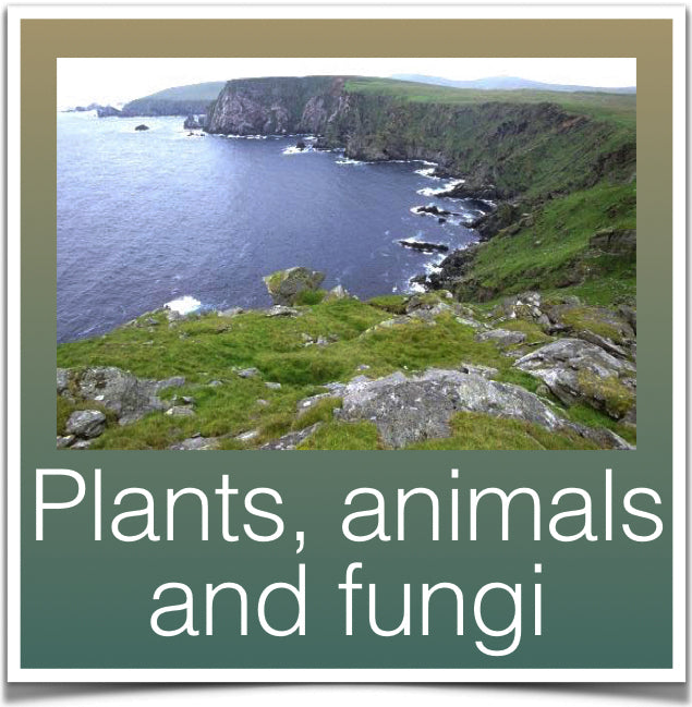Plants, animals and fungi