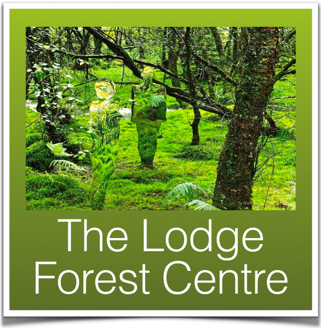 The Lodge forest walk