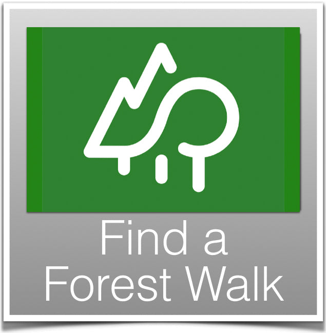 Find a Forest Walk