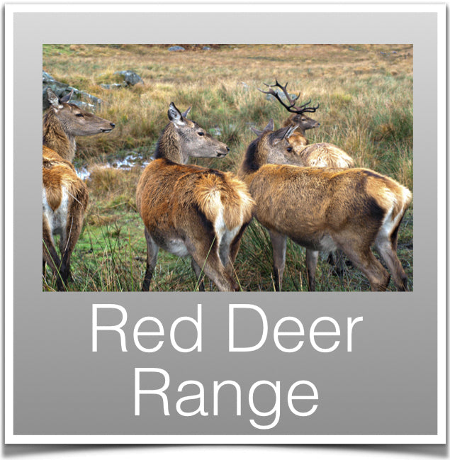 Red Deer Range
