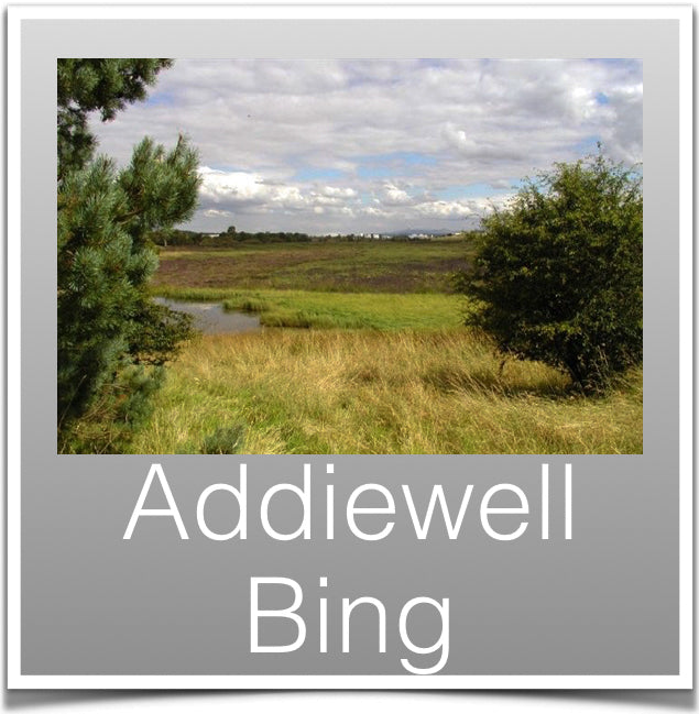 Addiwell Bing