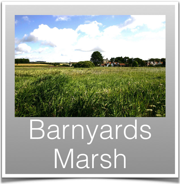 Barnyeards Marsh