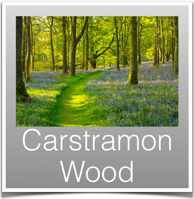 Carstramon Wood