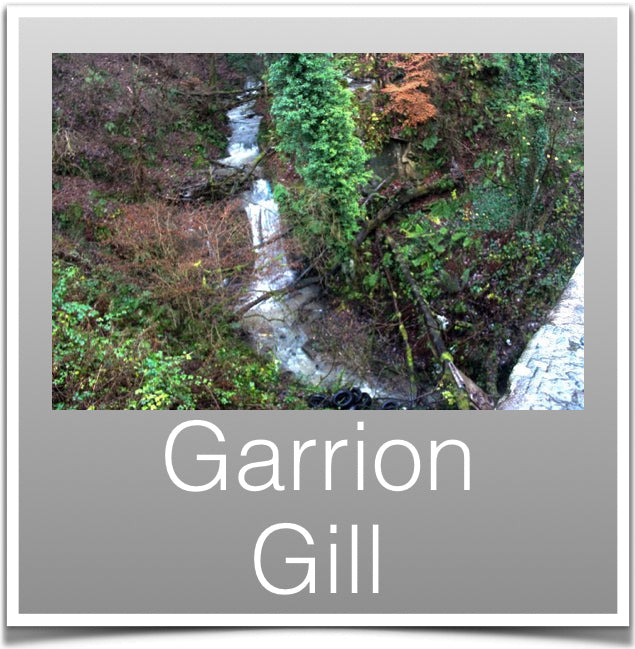 Garrion Gill