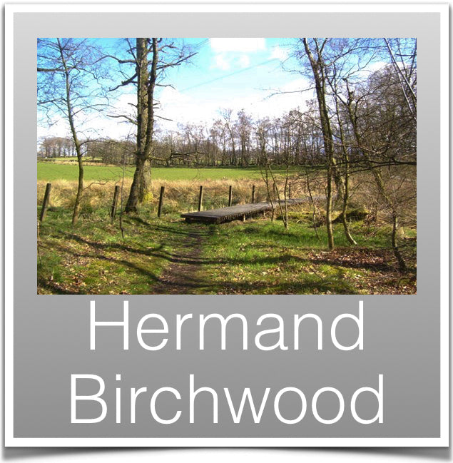Hermand Birchwood