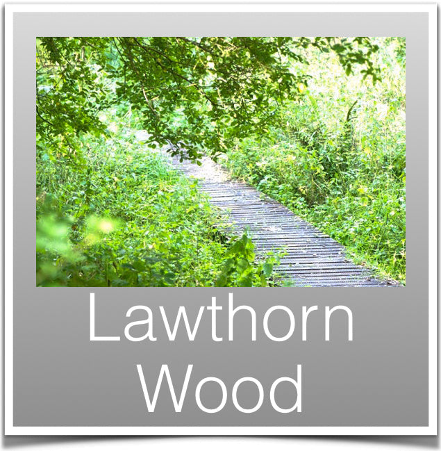 Lawthorn Wood