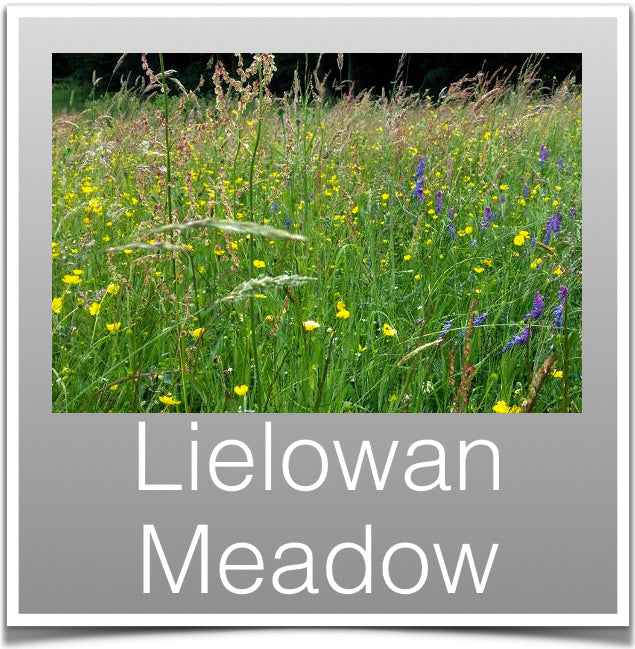 Lielowan Meadow