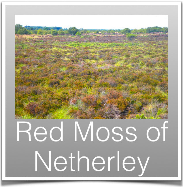 Red Moss of Netherley