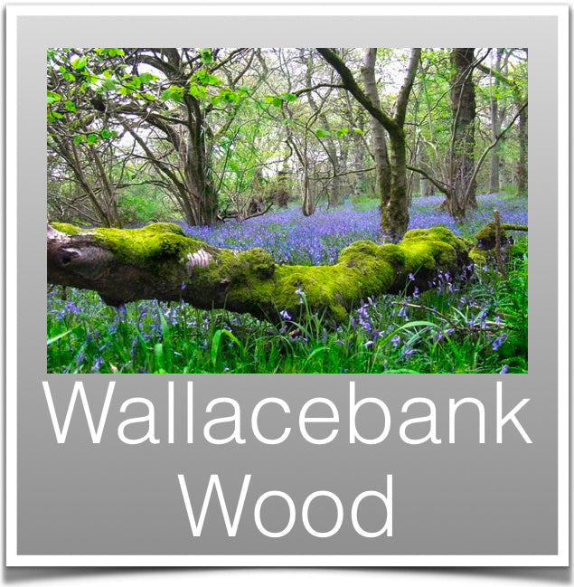 Wallacebank Wood