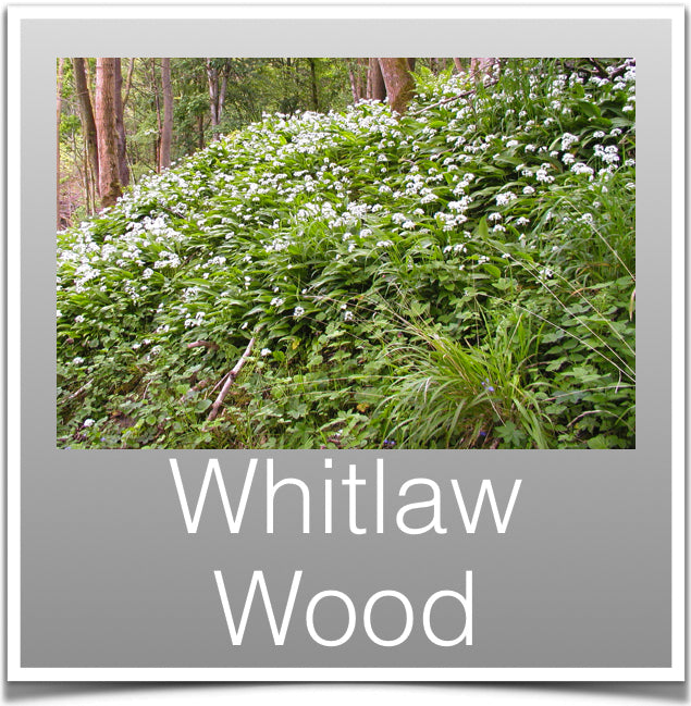 Whitlaw Wood