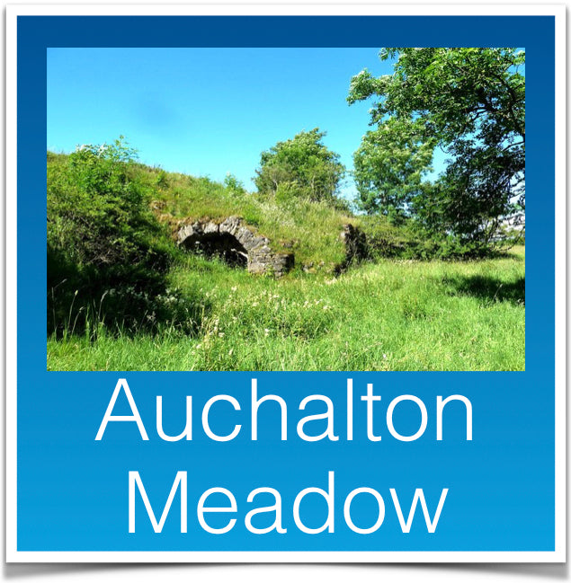 Auchalton Meadow