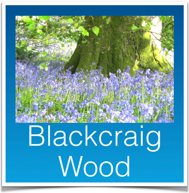 Blackcraig Wood