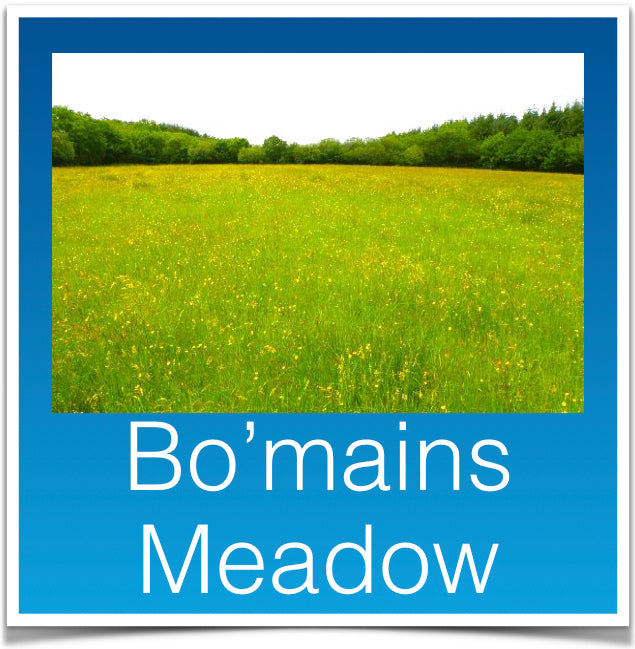 Bo'mains Meadow