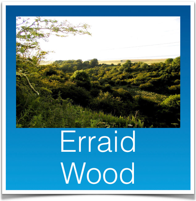 Erraid Wood