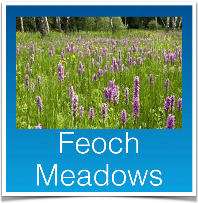 Feoch Meadows
