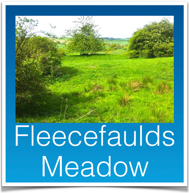 Fleecefaulds Meadow