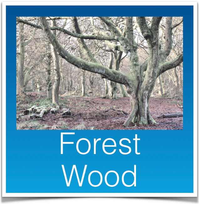 Forest Wood