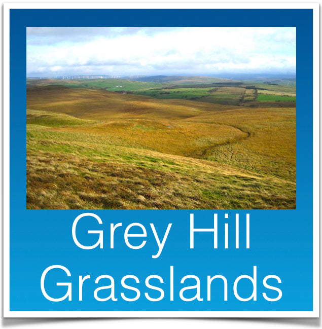 Grey Hill Grasslands