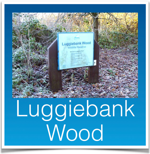 Luggiebank Wood