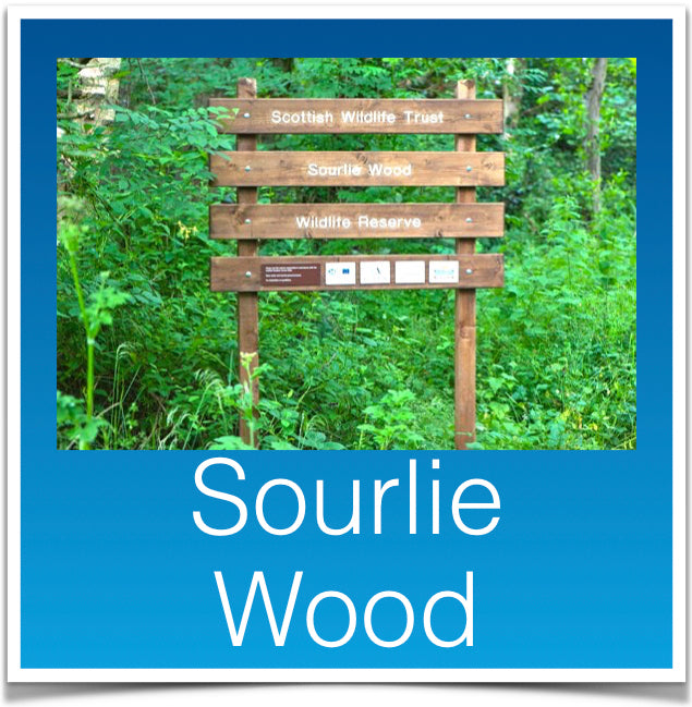 Sourlie Wood
