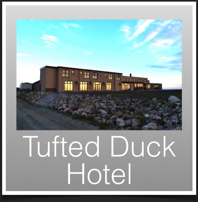 Tufted Duck hotel